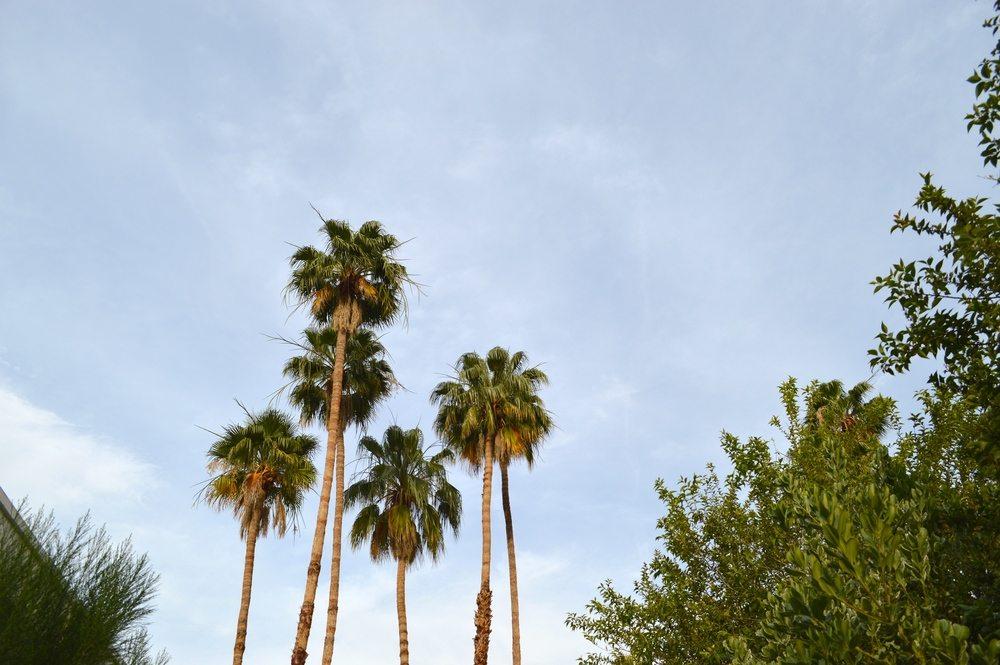Top Ten Palm Springs Restaurants