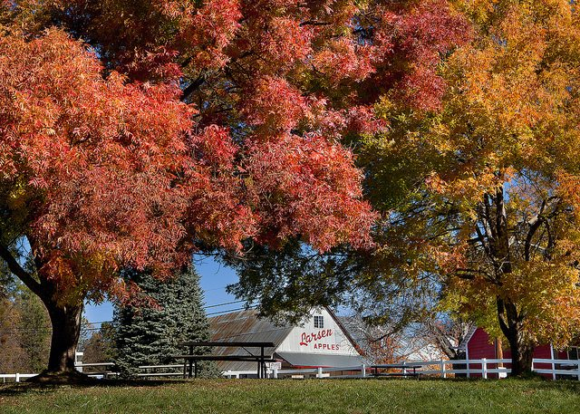 Apple Hill, photo via: https://www.flickr.com/photos/25014270@N08/6413166313/