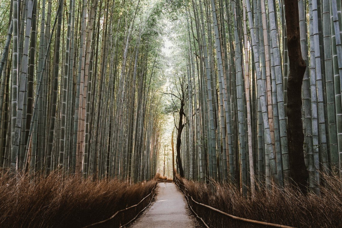 12 Beautiful Japanese Words You Have to Know
