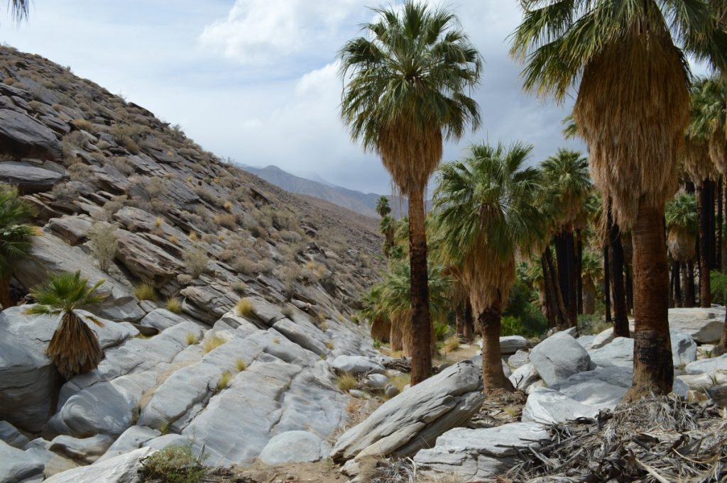 Incredible Things to Do in Palm Springs